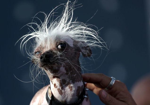 Toto sú najkrajšie fotografie psov, ktoré tento rok uvidíš
