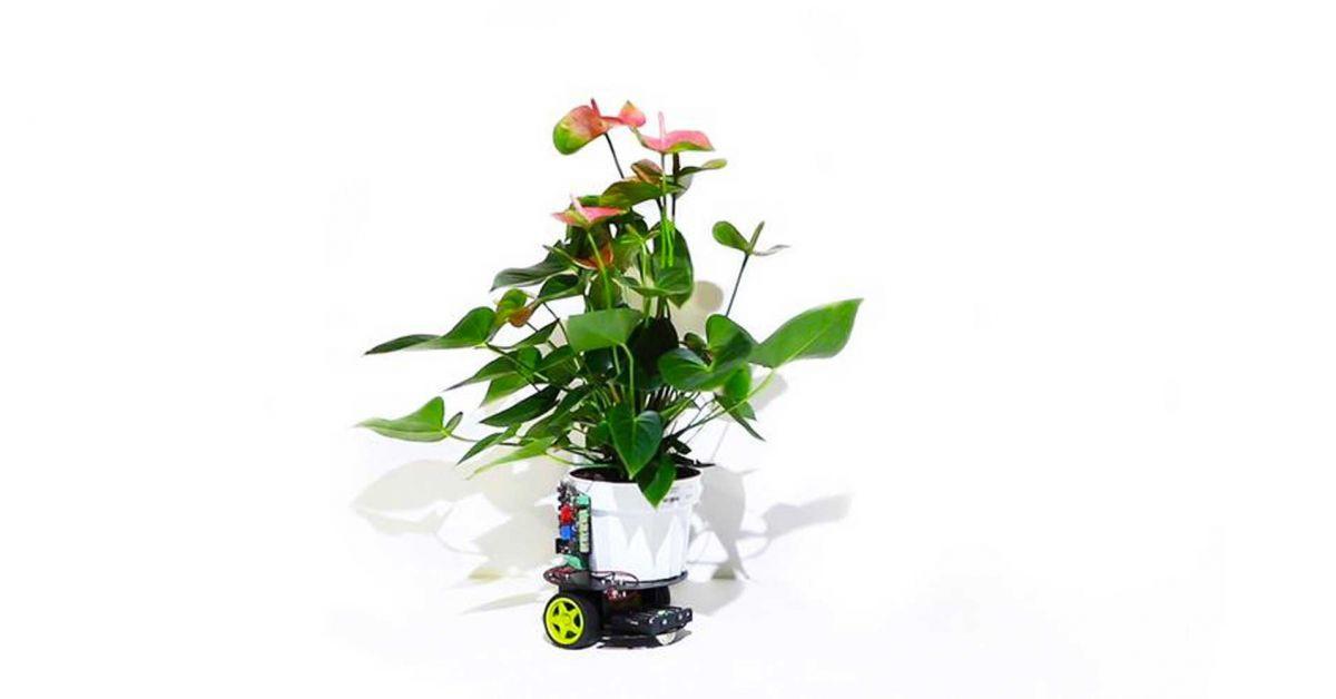 elowan rastlina robot elektronika mit vedci nikdy nezvadne