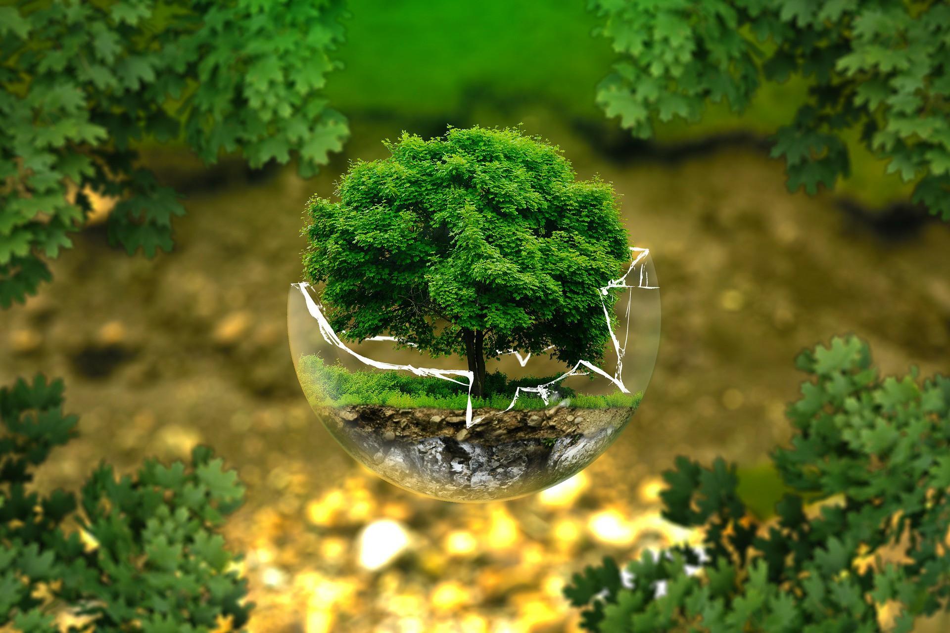 australia stromy vysadba klimaticke zmeny globalne oteplovanie
