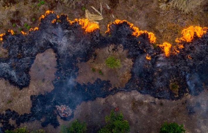 Amazonský prales v plameňoch