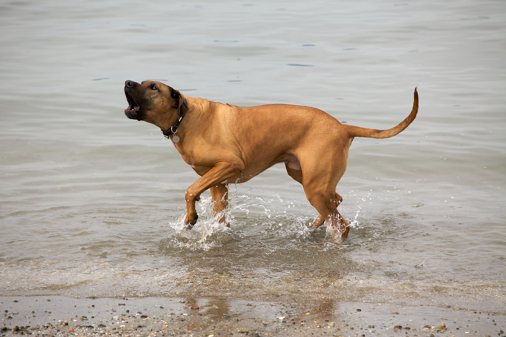 stekot psa